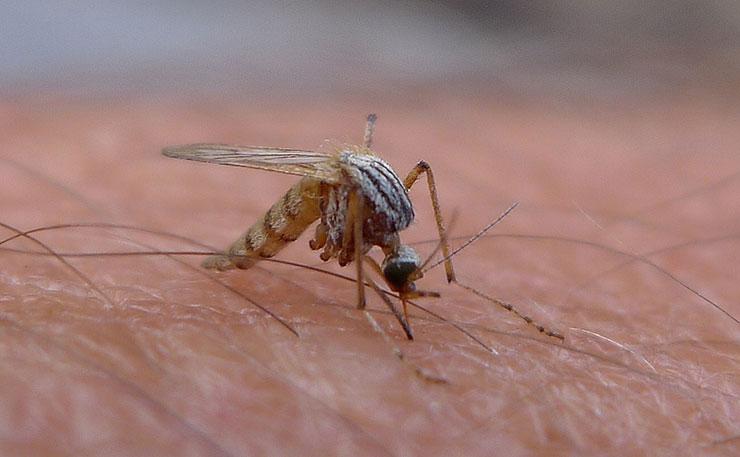 Mosquito-virus-Zika