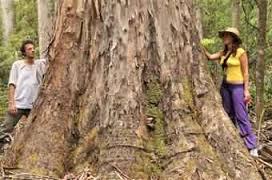 logging (GECO)